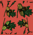 hand drawn seamless pattern with acorns vector image vector image