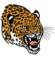leopard head vector image vector image