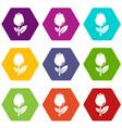 tulip icons set 9 vector image