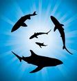 sharks underwater vector image