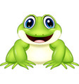cartoon frog isolated on white background vector image vector image