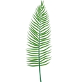 Fern leaf vector image