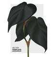 modern black contrast foliage monstera leaf vector image vector image