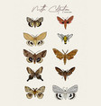 moth collection hand draw sketch vector image vector image