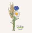 wheat ears with chamomile and cornflowers rustic vector image