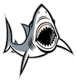 shark with opened mouth vector image