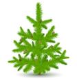 christmas fur-tree vector image vector image