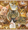 decorative seamless realistic cats heads vector image vector image