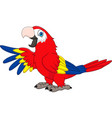 cartoon funny macaw vector image vector image