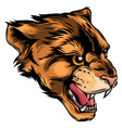 cougar panther mascot head graphic vector image vector image