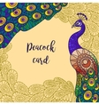 Peacock greeting card design vector image
