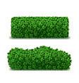 realistic detailed 3d green hedges set vector image vector image