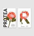 watercolor nature realistic protea art in garden vector image vector image