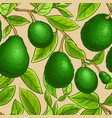avocado branches pattern vector image vector image
