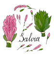 branches and flowers sage hand drawn on a vector image vector image