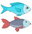 fish colored sketch vector image