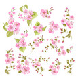 collection cherry flowers set cherry blossom vector image vector image