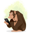 gorilla with smartphone vector image vector image