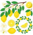 Lemon Set vector image vector image