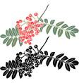 rowan berry branch stencil vector image vector image