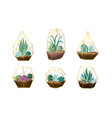 set green houseplants in pots vector image vector image