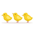 three cute chickens standing one after another vector image vector image