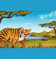 a tiger in nature scene vector image vector image