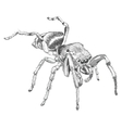Black spider animal vector image