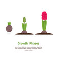 cartoon color phases plant growth card vector image vector image