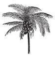 coconut palm vintage vector image