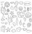 hand drawn seashells vector image
