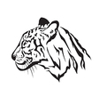 image an tiger vector image vector image