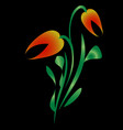 orange tulip for greeting card on a black vector image vector image
