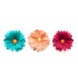 set of colored chrysanthemum flowers top view vector image