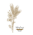 wheat ears and chamomiles bouquet hand drawn vector image vector image