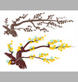 apricot blossom vector image