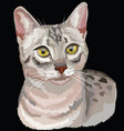 colored egyptian mau cat vector image