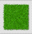 grass square 3d beautiful green grassy field vector image