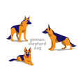 shepherd dog vector image