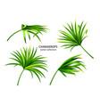 tropical chamaerops leavesset plants isolated vector image