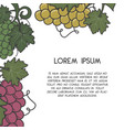 winery poster template with wine grapes in retro vector image