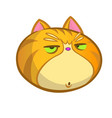 grumpy cat cartoon icon vector image