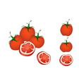 A Set of Delicious Fresh Red Tomatoes vector image