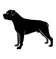 dog rottweiler breed silhouette vector image vector image