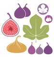 Fig Set vector image vector image