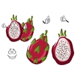 Ripe exotic pitaya or dragon fruit character vector image vector image