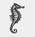 Sea horse abstract artistic lines vector image vector image
