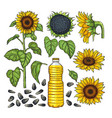pictures of nature products different vector image