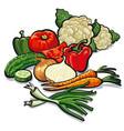 ripe fresh vegetables vector image vector image