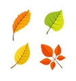 Yellow leaves set vector image